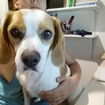 Dr-Sarina-Kilham-writing-with-large-beaglier-dog-on-lap